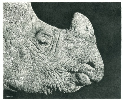 Rhino Drawing FAA 3