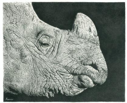 Rhino Drawing FAA 3